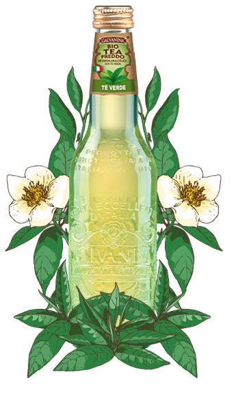 Tè Verde Bio